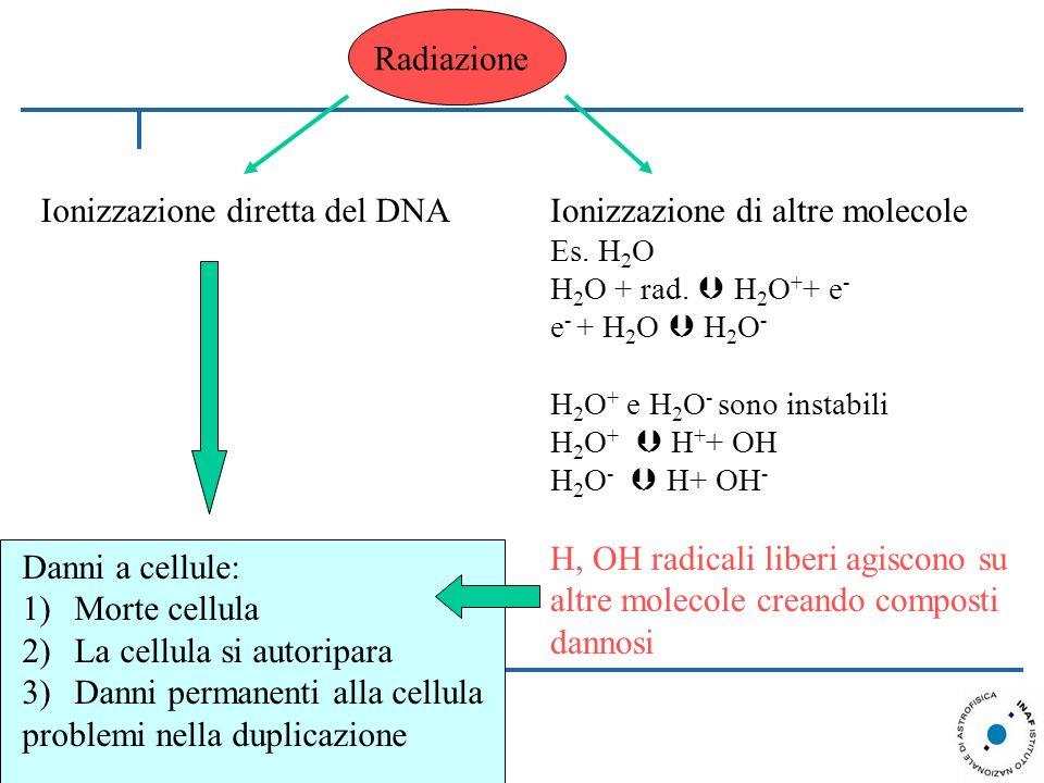 Radiazione Ionizzazione diretta del DNAIonizzazione di altre molecole Es.