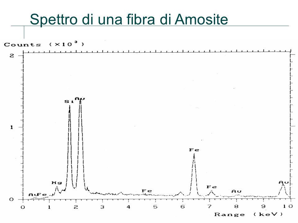 31 Spettro di una fibra di Amosite