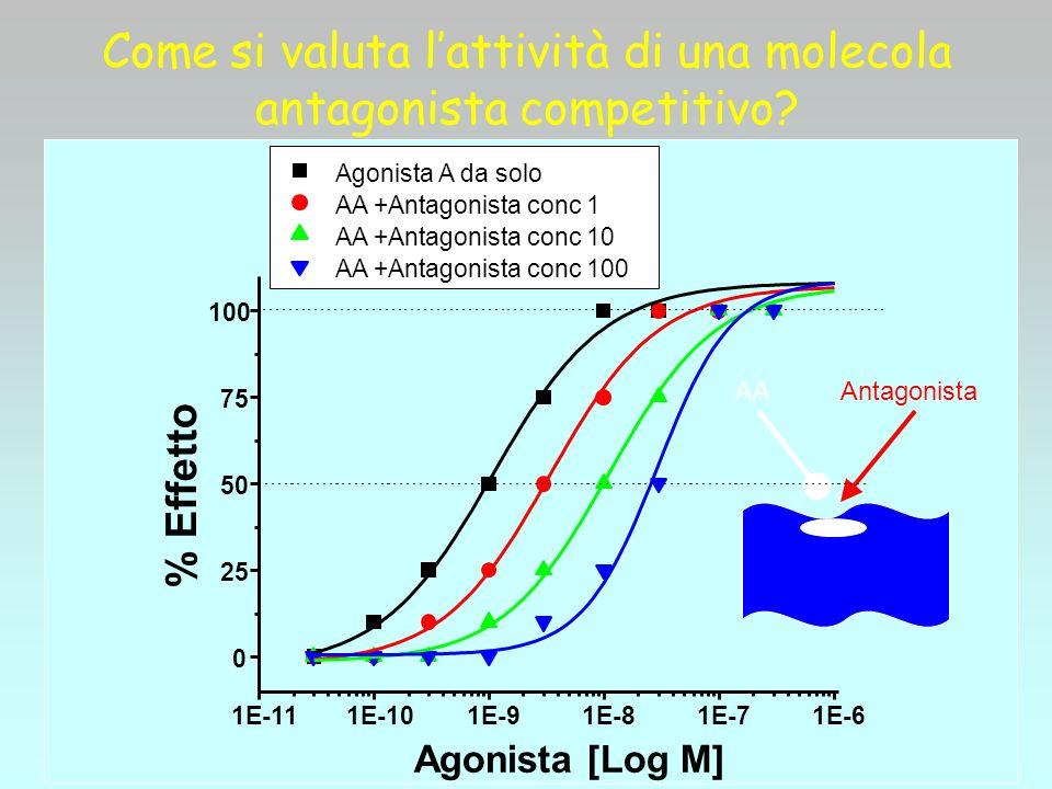 Come si valuta lattività di una molecola antagonista competitivo? AA Antagonista Agonista A da solo AA +Antagonista conc 1 AA +Antagonista conc 10 AA