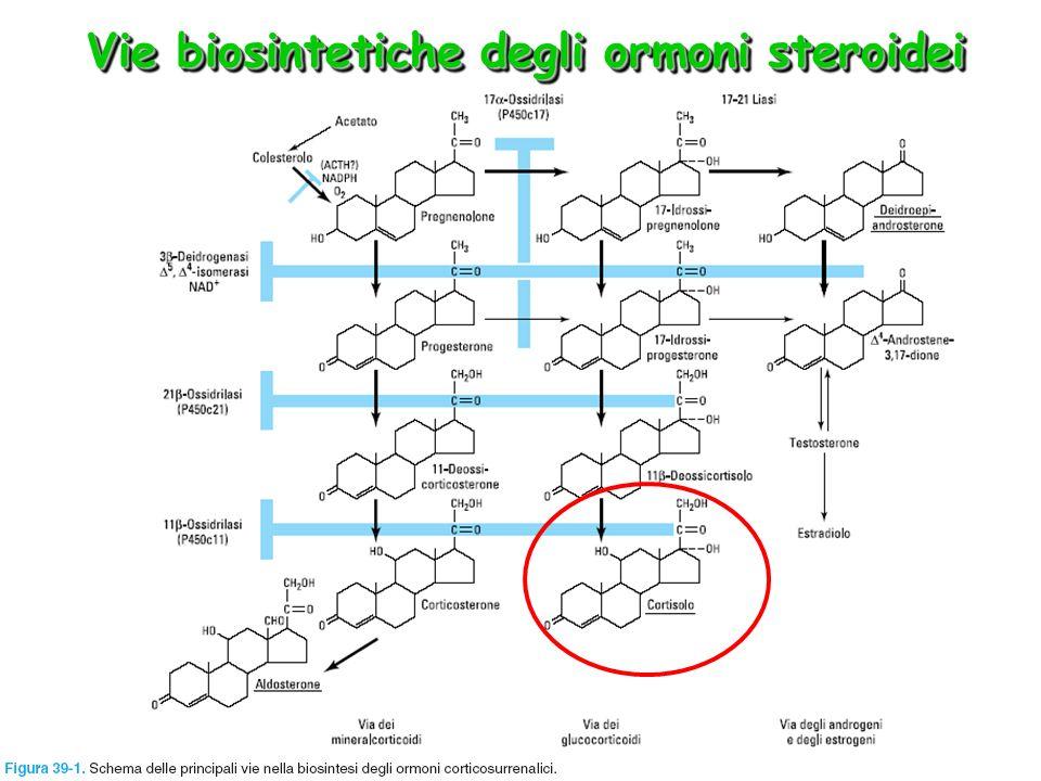 Vie di somministrazione dei glucocorticoidi Via orale (per tutte le molecole) Topica cutanea: desametasone, idrocortisone, triamcinolone Topica inalatoria: beclometasone, budesonide, flunisolide, fluticasone, triamcinolone (anche se vengono deglutiti, vengono eliminati quasi completamente perché hanno elevato metabolismo di primo passaggio) Topica nelle malattie infiammatorie del tratto intestinale: budesonide EV e IM: desametasone, idrocortisone, metilprednisone, metilprednisolone Le vie di somministrazione non sistemiche sono da preferire, ove possibile, in quanto causano minori effetti collaterali sistemici