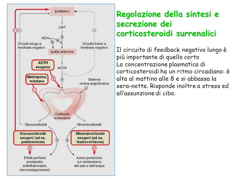 Alcuni parametri farmacocinetici dei glucocorticoidi Lassorbimento per via orale è buono.