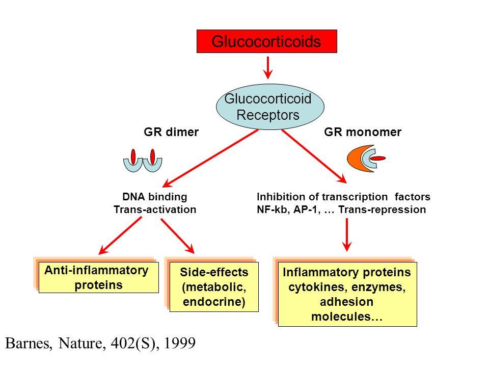 Glucocorticoid-regulated genes a)Increased gene trascription Lipocortin-1 (annexin-1, a PLA2 inhibitor) 2-adrenoceptor Secretory leucocyte inhibitory protein Clara cell protein (CC10, a PLA2 inhibitor) IL-1R2 (decoy receptor) IL-1ra (IL-1 receptor antagonist) IkB- (NF-kB inhibitor) From: Barnes et al., Ann.