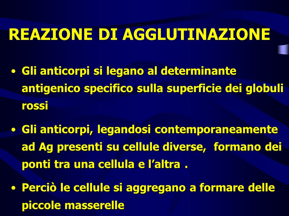 REAZIONE DI AGGLUTINAZIONE Gli anticorpi si legano al determinante antigenico specifico sulla superficie dei globuli rossi Gli anticorpi, legandosi co