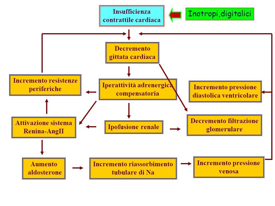 Insufficienza contrattile cardiaca Decremento gittata cardiaca Iperattività adrenergica compensatoria Ipofusione renale Incremento riassorbimento tubulare di Na Incremento pressione venosa Decremento filtrazione glomerulare Incremento resistenze periferiche Attivazione sistema Renina-AngII Aumento aldosterone Incremento pressione diastolica ventricolare Inotropi,digitalici