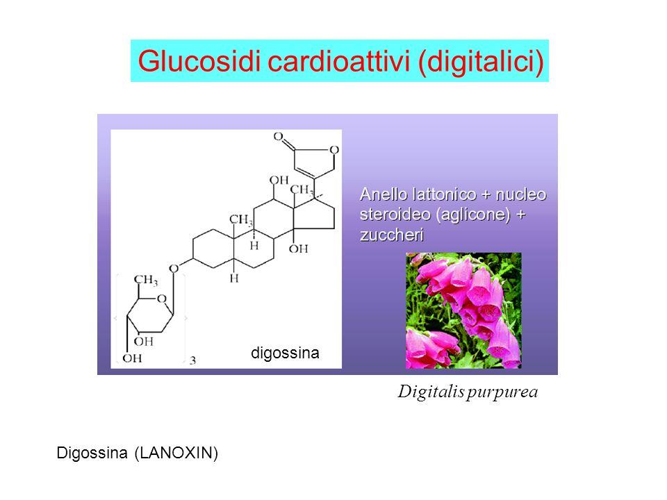 digossina Glucosidi cardioattivi (digitalici) Digitalis purpurea Digossina (LANOXIN)