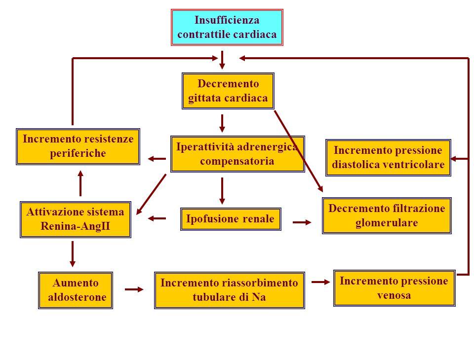 TrialACEIControlsRR (95% CI) CONSENSUS I SOLVD (Treatment) SOLVD (Prevention) Chronic CHF 39%54%0.56 (0.34–0.91) 40%35%0.82 (0.70–0.97) 15%16%0.92 (0.79–1.08) Mortality IMPORTANTE: gli ACE-inibitori migliorano la sopravvivenza in pazienti con diversi gradi di insufficienza cardiaca (SOLVD-T, CONSENSUS-1).