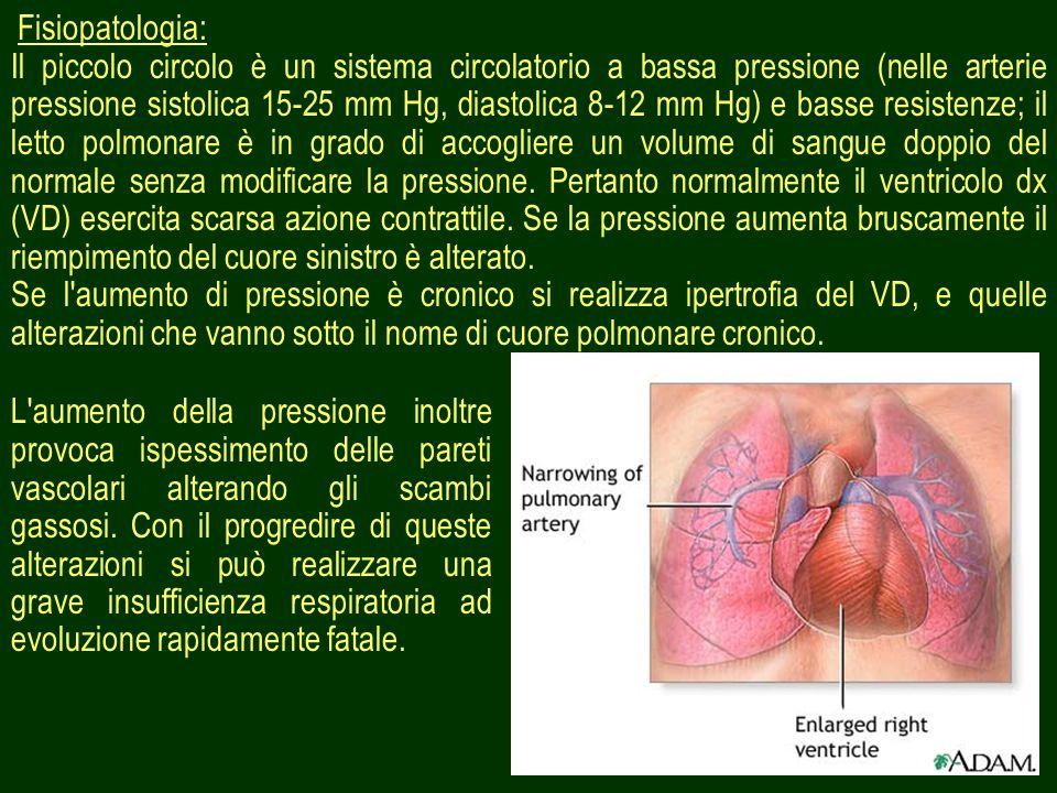 19 Fisiopatologia: Il piccolo circolo è un sistema circolatorio a bassa pressione (nelle arterie pressione sistolica 15-25 mm Hg, diastolica 8-12 mm H