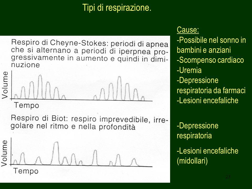 23 Tipi di respirazione. Cause: -Possibile nel sonno in bambini e anziani -Scompenso cardiaco -Uremia -Depressione respiratoria da farmaci -Lesioni en