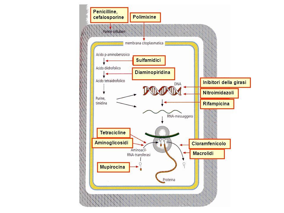 Penicilline, cefalosporine Polimixine Mupirocina Aminoglicosidi Tetracicline Diaminopiridina Sulfamidici Inibitori della girasi Nitroimidazoli Rifampicina Cloramfenicolo Macrolidi