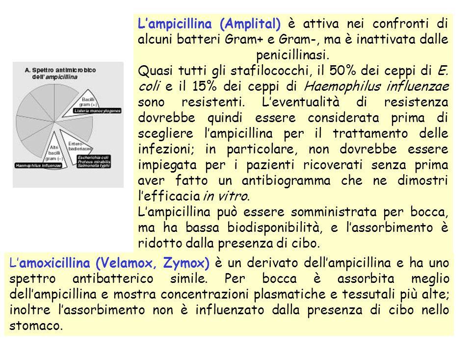 Lampicillina (Amplital) è attiva nei confronti di alcuni batteri Gram+ e Gram-, ma è inattivata dalle penicillinasi.