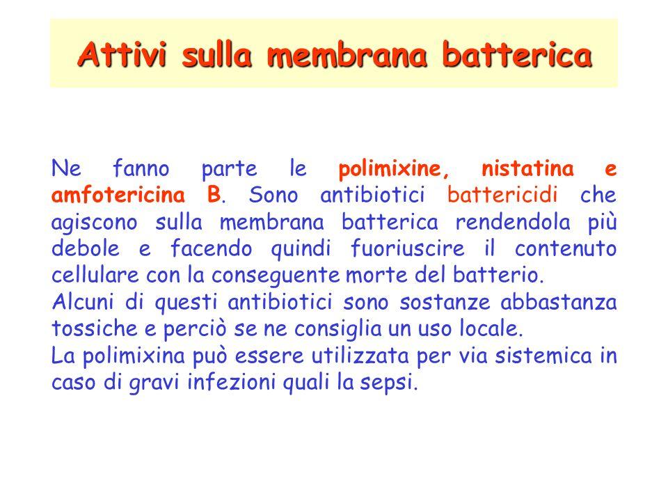 Attivi sulla membrana batterica Ne fanno parte le polimixine, nistatina e amfotericina B.