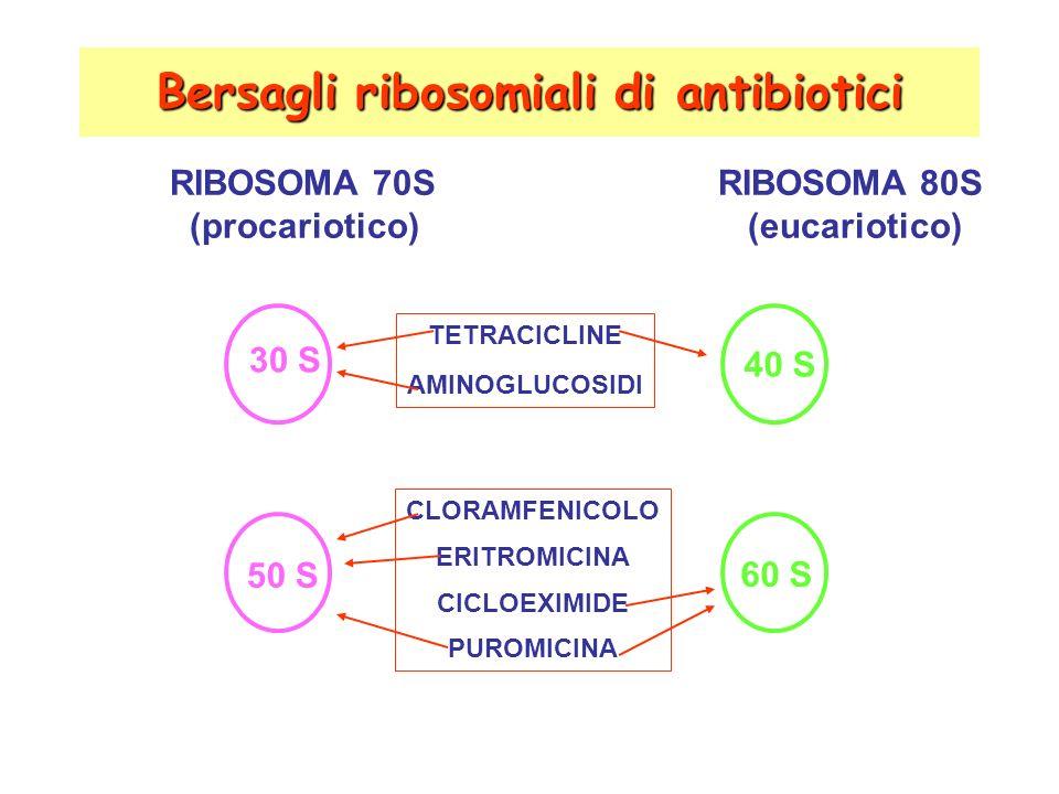 Bersagli ribosomiali di antibiotici RIBOSOMA 70S RIBOSOMA 80S (procariotico) (eucariotico) TETRACICLINE AMINOGLUCOSIDI CLORAMFENICOLO ERITROMICINA CICLOEXIMIDE PUROMICINA 30 S 60 S 40 S 50 S