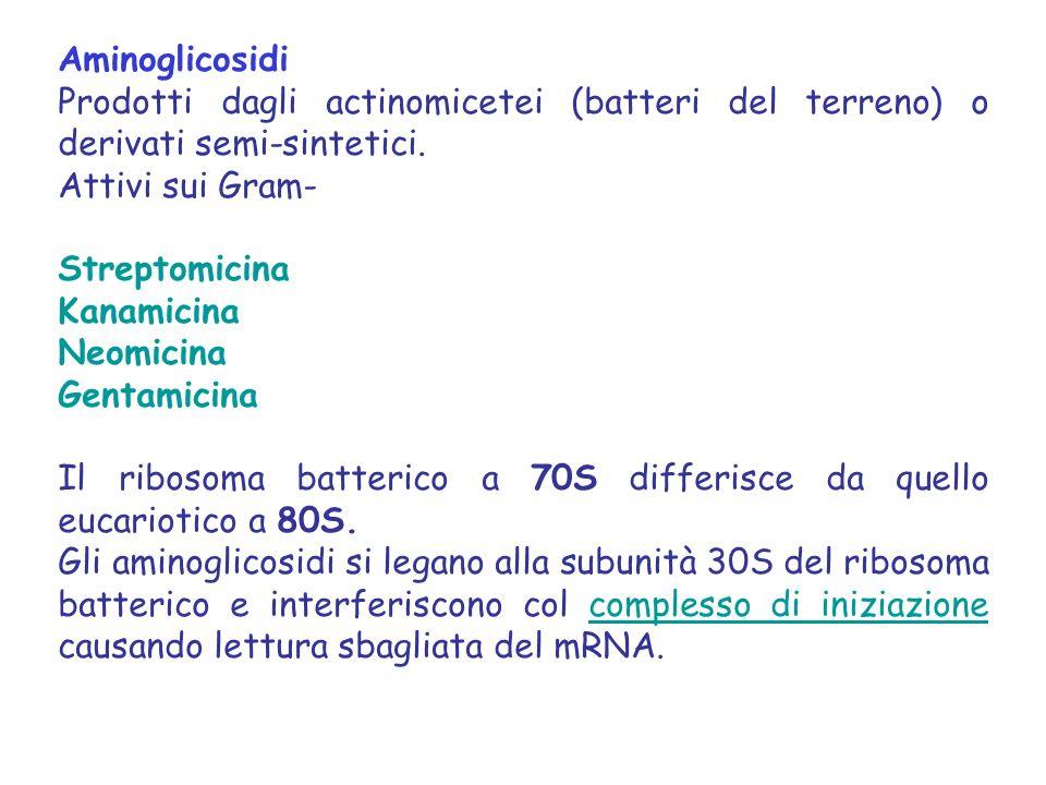Aminoglicosidi Prodotti dagli actinomicetei (batteri del terreno) o derivati semi-sintetici.