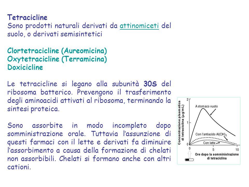 Tetracicline Sono prodotti naturali derivati da attinomiceti del suolo, o derivati semisintetici Clortetracicline (Aureomicina) Oxytetracicline (Terramicina) Doxicicline Le tetracicline si legano alla subunità 30S del ribosoma batterico.