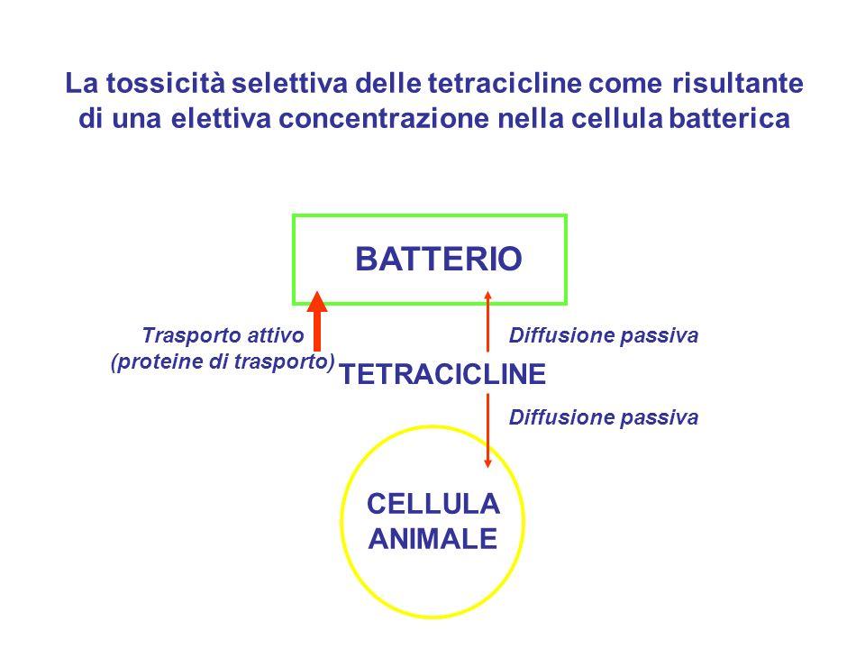 La tossicità selettiva delle tetracicline come risultante di una elettiva concentrazione nella cellula batterica BATTERIO CELLULA ANIMALE TETRACICLINE Trasporto attivo (proteine di trasporto) Diffusione passiva