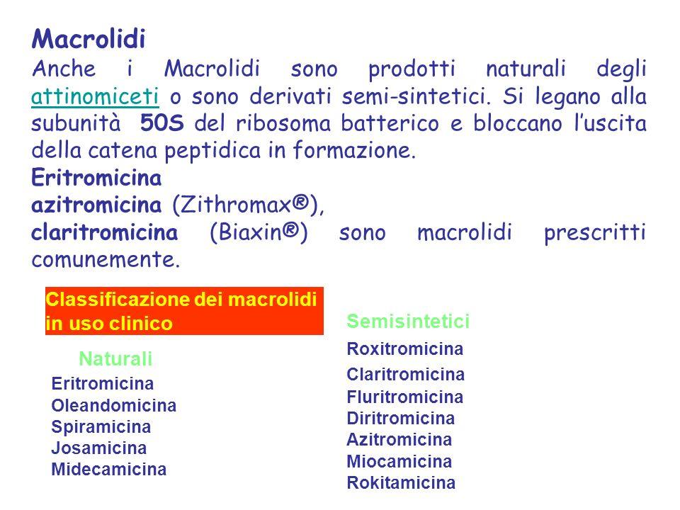 Macrolidi Anche i Macrolidi sono prodotti naturali degli attinomiceti o sono derivati semi-sintetici.