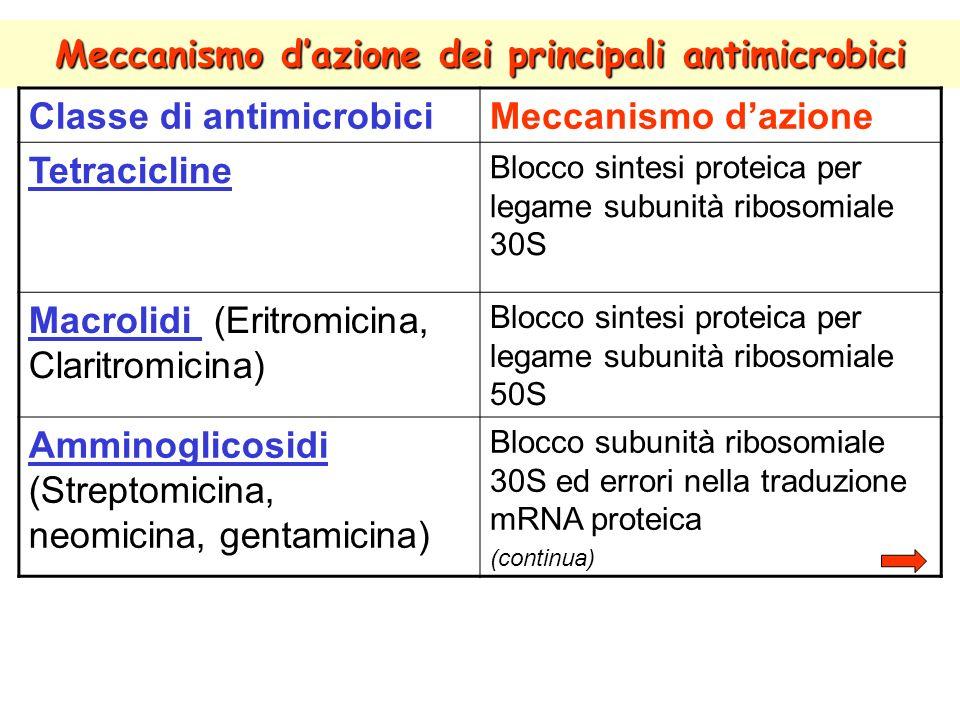 Meccanismo dazione dei principali antimicrobici Classe di antimicrobiciMeccanismo dazione Tetracicline Blocco sintesi proteica per legame subunità ribosomiale 30S Macrolidi (Eritromicina, Claritromicina) Blocco sintesi proteica per legame subunità ribosomiale 50S Amminoglicosidi (Streptomicina, neomicina, gentamicina) Blocco subunità ribosomiale 30S ed errori nella traduzione mRNA proteica (continua)