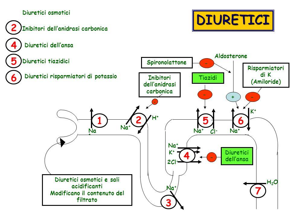 1 2 4 56 Diuretici osmotici e sali acidificanti Modificano il contenuto del filtrato Na + 2Cl - Na + H+H+ K+K+ - Diuretici dellansa - Inibitori dellan