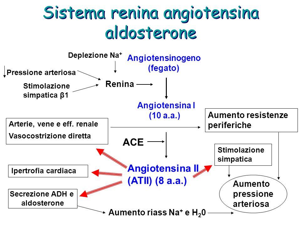 Sistema renina angiotensina aldosterone Pressione arteriosa Stimolazione simpatica β1 Renina Deplezione Na + Angiotensinogeno (fegato) Angiotensina I