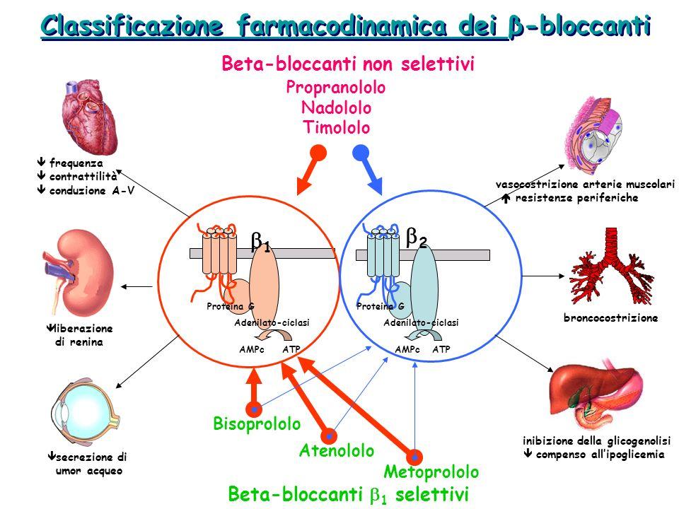 Classificazione farmacodinamica dei β-bloccanti Proteina G Adenilato-ciclasi ATPAMPc 1 2 Proteina G Adenilato-ciclasi ATPAMPc Propranololo Nadololo Ti