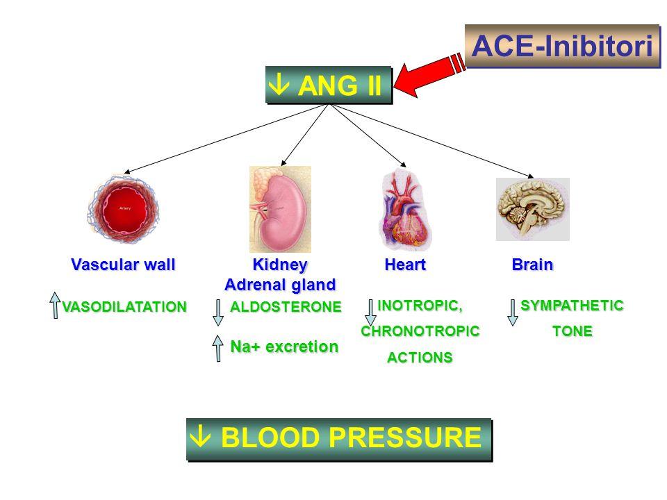 SYMPATHETICTONE ANG II Na+ excretion INOTROPIC,CHRONOTROPICACTIONS ACE-Inibitori Vascular wall Kidney Adrenal gland Heart Brain VASODILATATION BLOOD P