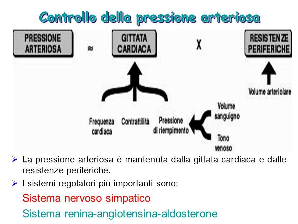 Controllo della pressione arteriosa La pressione arteriosa è mantenuta dalla gittata cardiaca e dalle resistenze periferiche. I sistemi regolatori più