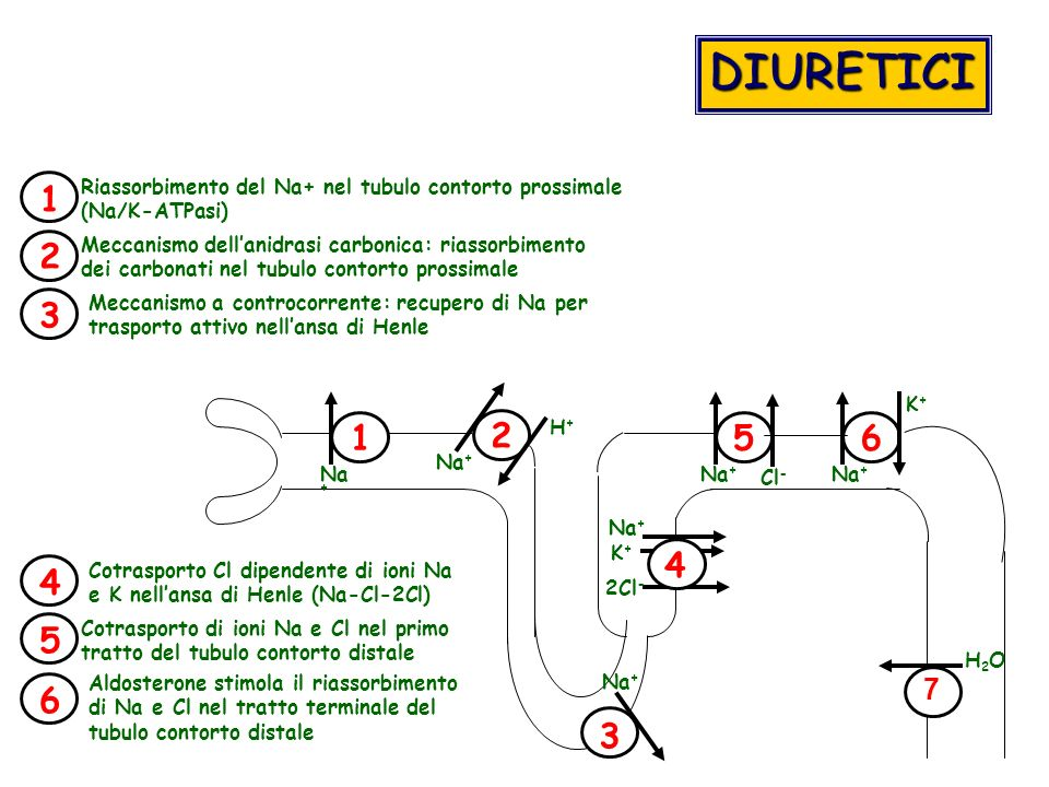 1 2 4 56 Na + 2Cl - Na + H+H+ K+K+ DIURETICI 3 K+K+ Cl - Riassorbimento del Na+ nel tubulo contorto prossimale (Na/K-ATPasi) 213645 Meccanismo dellani