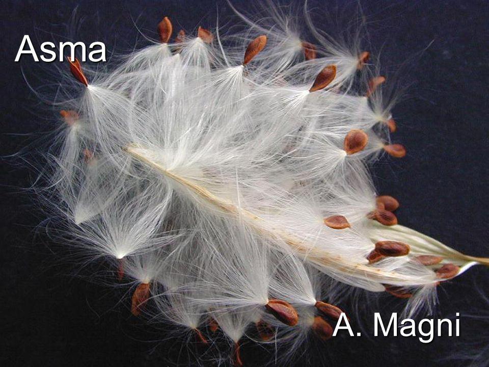 1 31 Lasma si può dividere in due categorie 1- Asma estrinseco (allergico) causato da allergeni: polveri