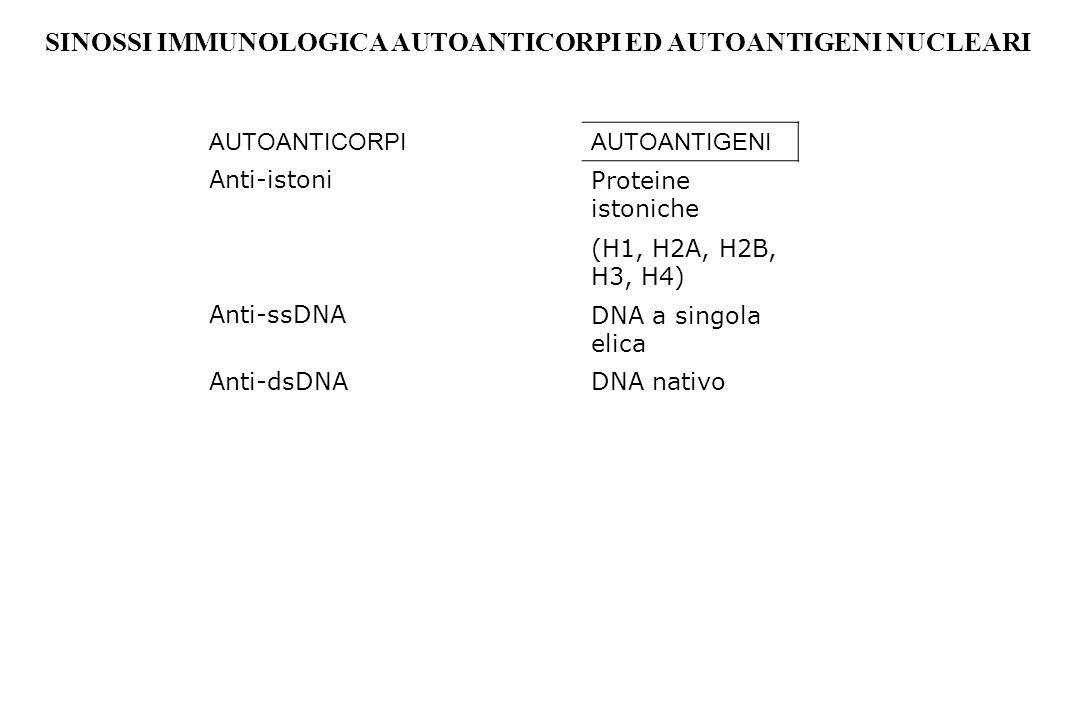 AUTOANTICORPIAUTOANTIGENI Anti-istoniProteine istoniche (H1, H2A, H2B, H3, H4) Anti-ssDNADNA a singola elica Anti-dsDNADNA nativo SINOSSI IMMUNOLOGICA