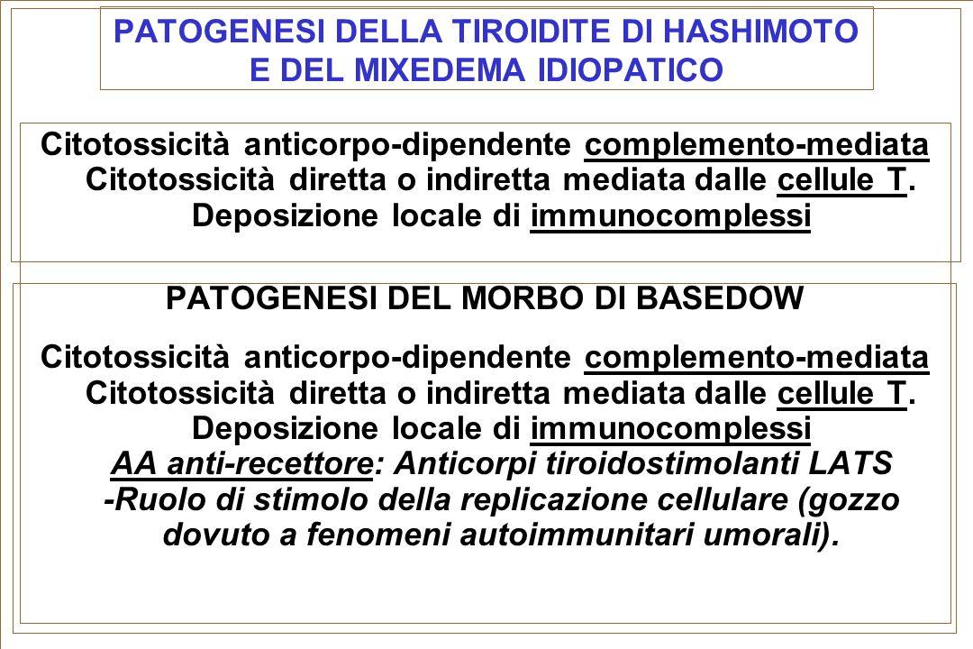 PATOGENESI DELLA TIROIDITE DI HASHIMOTO E DEL MIXEDEMA IDIOPATICO Citotossicità anticorpo-dipendente complemento-mediata Citotossicità diretta o indir