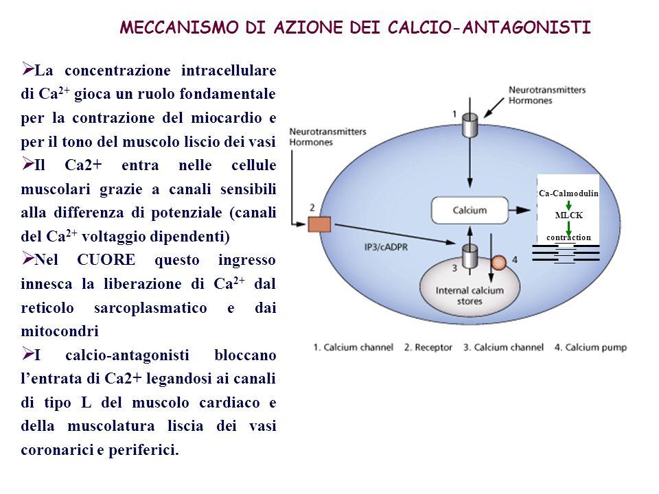 DILATAZIONE Vasi a resistenza MECCANISMO DAZIONE NELLANGINA DILATAZIONE coronarie POSTCARICO Lavoro del cuore spesa energetica Perfusione miocardio ischemico ANGINA VASOSPASTICA (variante) CONTRAZIONE CONDUZIONE AV ANGINA CORONARIOSCLEROTICA (tipica)