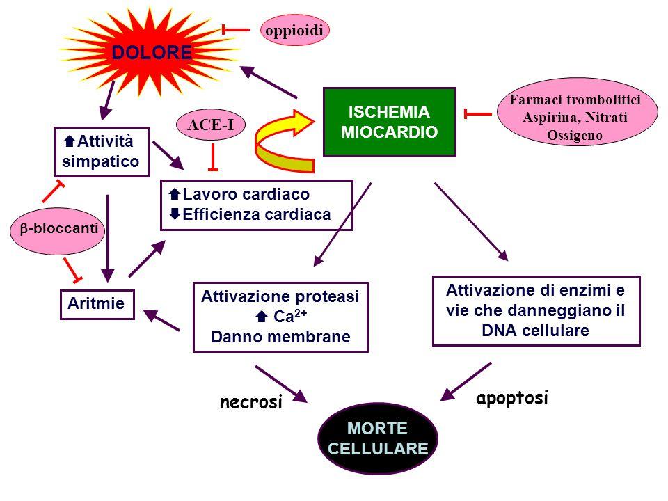 Attivazione proteasi Ca 2+ Danno membrane ISCHEMIA MIOCARDIO DOLORE Attivazione di enzimi e vie che danneggiano il DNA cellulare MORTE CELLULARE Aritm