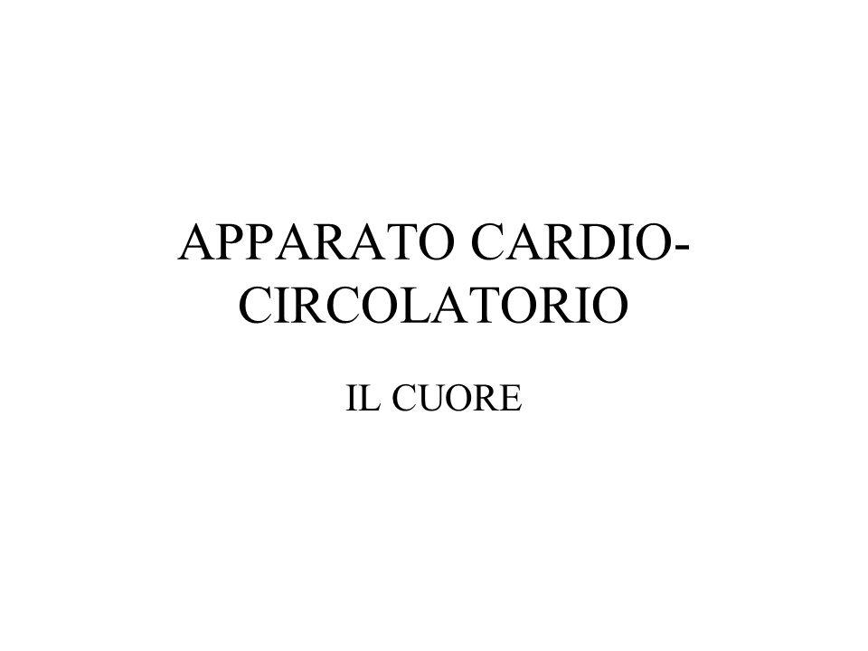 APPARATO CARDIO- CIRCOLATORIO IL CUORE