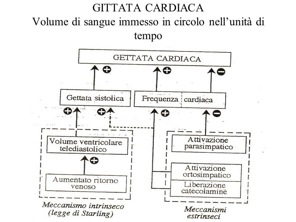 GITTATA CARDIACA Volume di sangue immesso in circolo nellunità di tempo