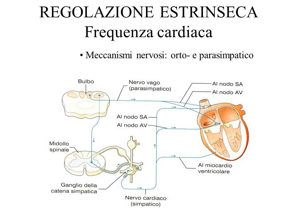 REGOLAZIONE ESTRINSECA Frequenza cardiaca Meccanismi nervosi: orto- e parasimpatico