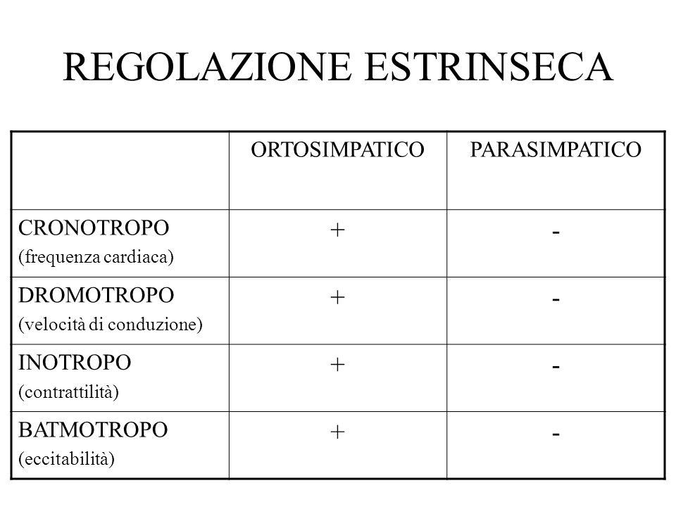 REGOLAZIONE ESTRINSECA ORTOSIMPATICOPARASIMPATICO CRONOTROPO (frequenza cardiaca) +- DROMOTROPO (velocità di conduzione) +- INOTROPO (contrattilità) +