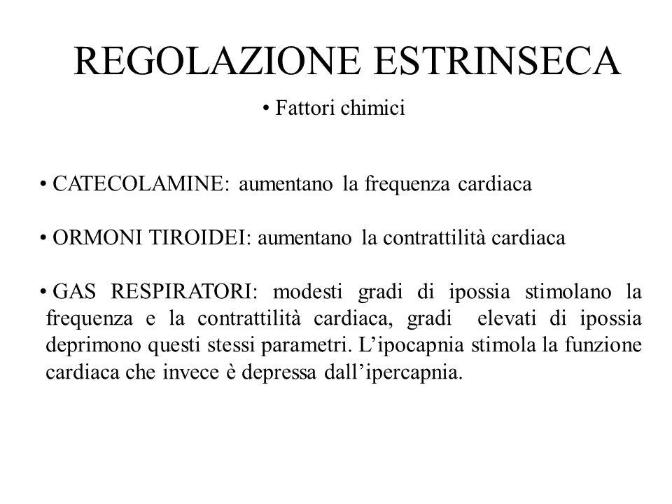Fattori chimici CATECOLAMINE: aumentano la frequenza cardiaca ORMONI TIROIDEI: aumentano la contrattilità cardiaca GAS RESPIRATORI: modesti gradi di i