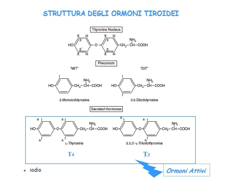 TRH IPOTALAMO TSH IPOFISI T4 T3 TIROIDE T4T3 liberi legati sangue - - + + T4 rT3 T3 T2 T4S rT3S T4G T-RecEffetti T3s T1 T0 Tessuti periferici T4 T3 99.5% Thyroxine binding globulin TBG Bile, urine