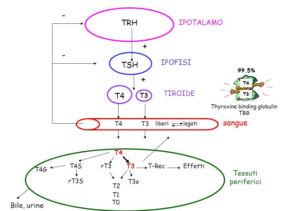 TRH IPOTALAMO TSH IPOFISI T4 T3 TIROIDE T4T3 liberi legati sangue - - + + T4 rT3 T3 T2 T4S rT3S T4G T-RecEffetti T3s T1 T0 Tessuti periferici T4 T3 99