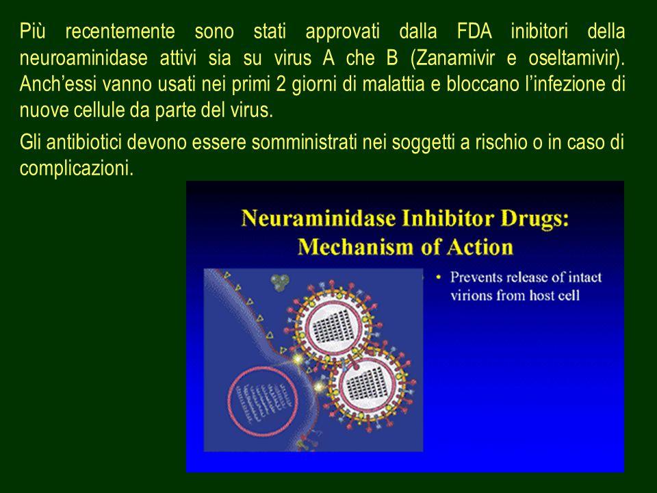 47 Più recentemente sono stati approvati dalla FDA inibitori della neuroaminidase attivi sia su virus A che B (Zanamivir e oseltamivir). Anchessi vann