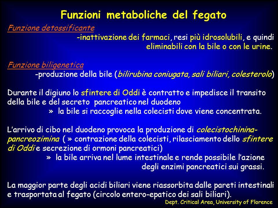METABOLISMO ED ESCREZIONE DELLA BILIRUBINA SISTEMA RETICOLO- ENDOTELIALE Distruzione eritrociti senescenti MIDOLLO Distruzione eritrociti in maturazione 80-85% Emoglobina FEGATO Turn-over delleme e dei suoi prodotti EME BILIVERDINA BILIRUBINA GLUCURONIDE UROBILINOGENI Escrezione Fecale GLOBINA Eme ossigenasi Biliverdina reduttasi Glucoronil- transferasi