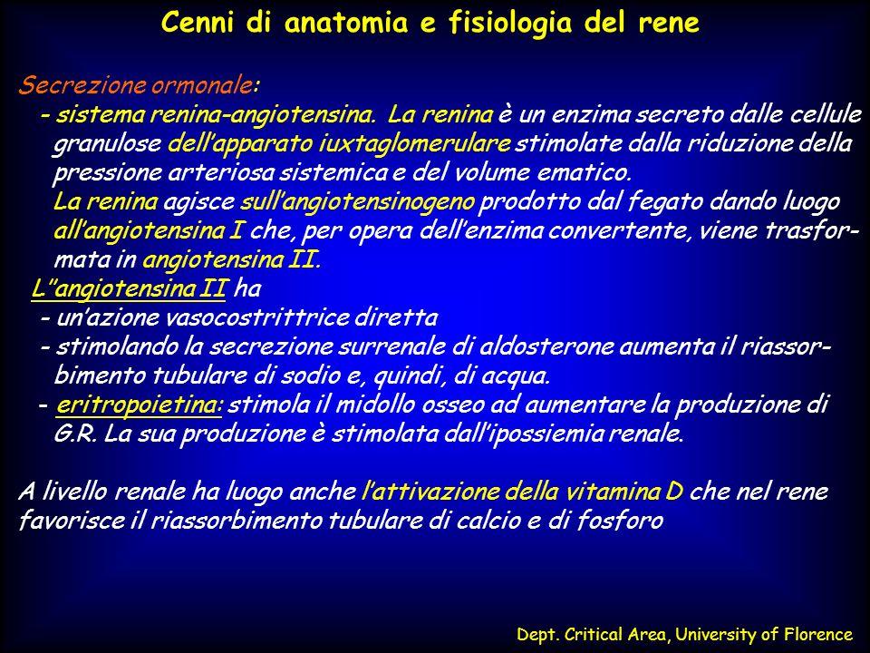 Dept. Critical Area, University of Florence Cenni di anatomia e fisiologia del rene Secrezione ormonale: - sistema renina-angiotensina. La renina è un