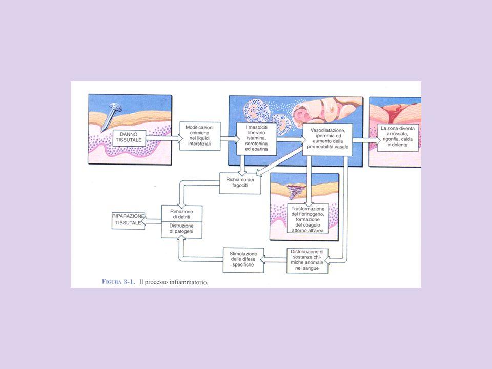 Sistemi di difesa messi in atto dai vertebrati: 1a è costituita da un sistema di barriere meccaniche e chimiche (cute, sostanze) 2a è rappresentata: dai fattori umorali e cellulari della immunità naturale dai meccanismi della infiammazione 3a è formata dai fattori umorali e cellulari dell immunità specifica (o acquisita o adattiva)