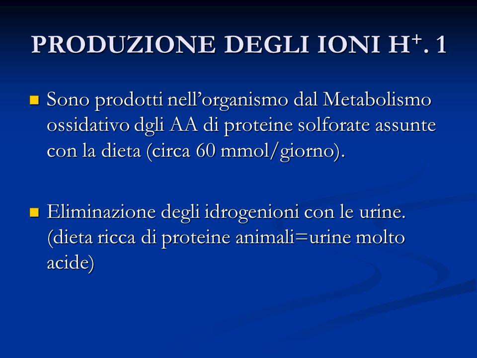 PRODUZIONE DEGLI IONI H +.