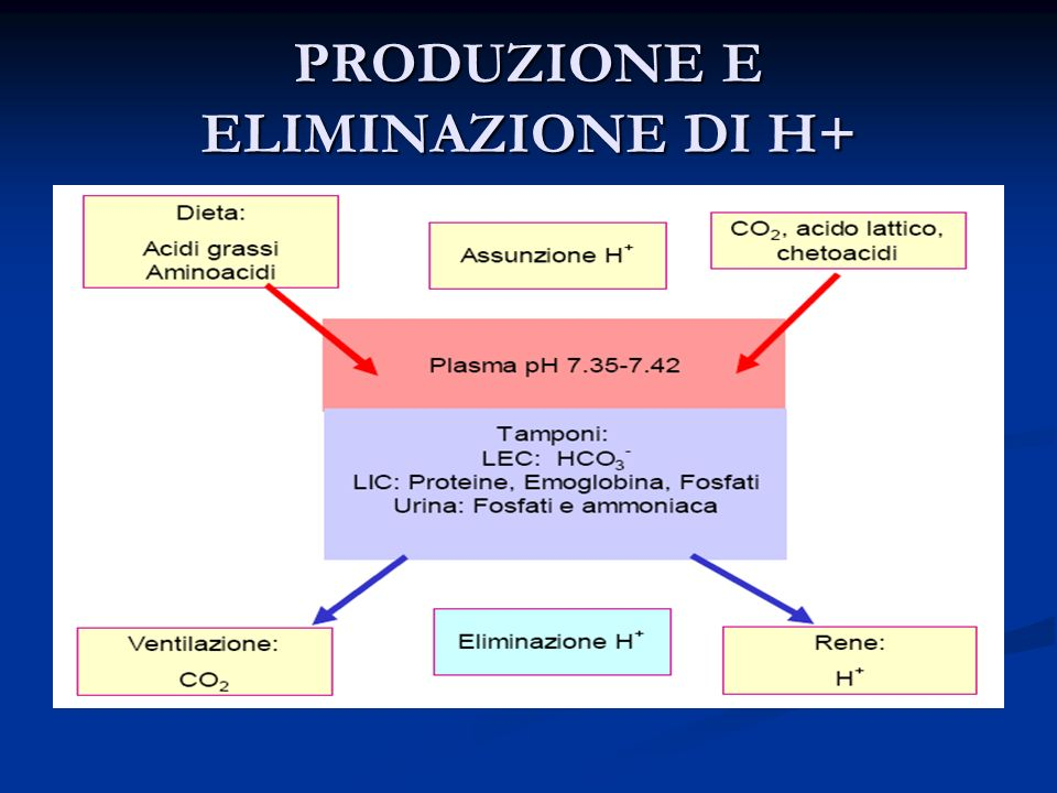 Escrezione degli idrogenioni