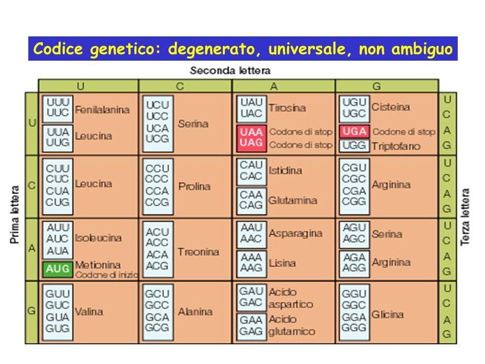 Codice genetico: degenerato, universale, non ambiguo