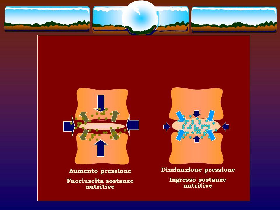 Aumento pressione Fuoriuscita sostanze nutritive Diminuzione pressione Ingresso sostanze nutritive