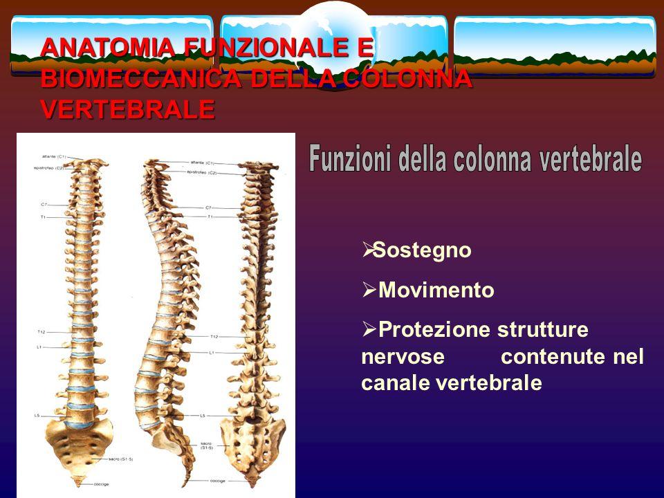 Sostegno Movimento Protezione strutture nervose contenute nel canale vertebrale ANATOMIA FUNZIONALE E BIOMECCANICA DELLA COLONNA VERTEBRALE