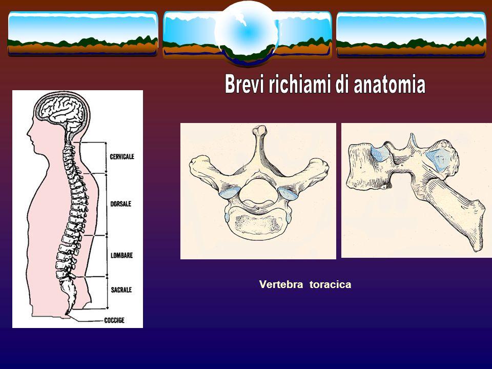 La porzione anteriore, o somatica, viene sollecitata da forze prevalentemente assiali; la porzione posteriore, rappresentata dai processi articolari, viene sollecitata da forze prevalentemente di taglio La C.V.