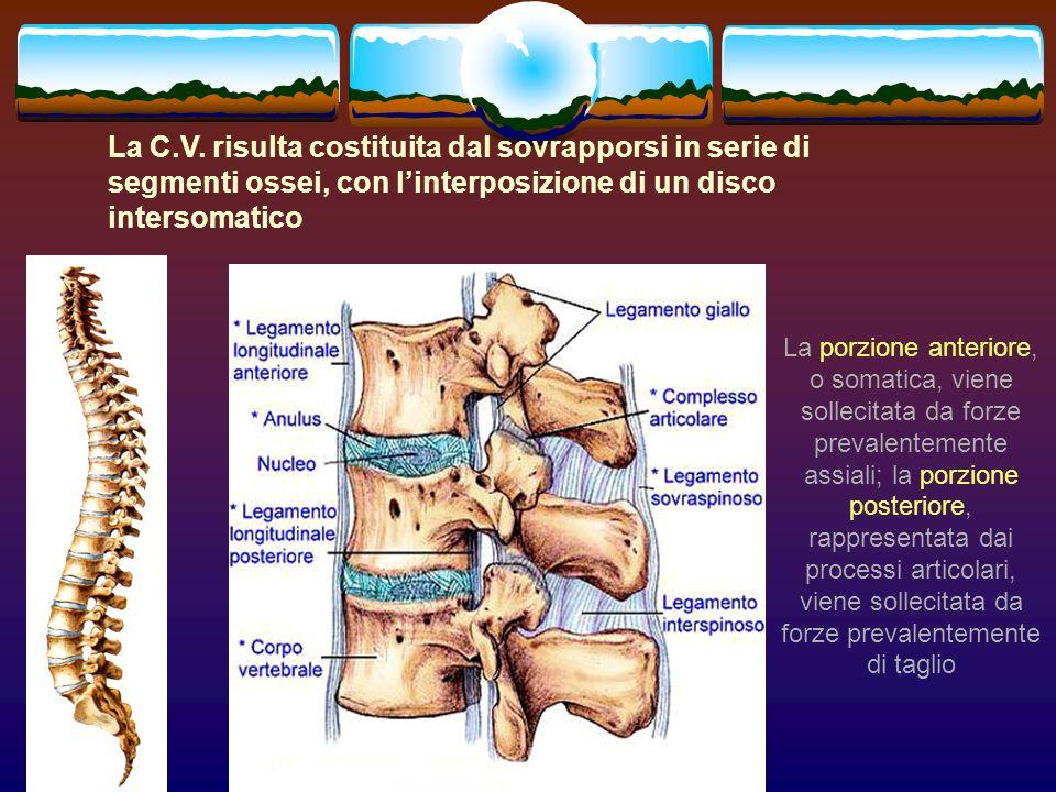 La porzione anteriore, o somatica, viene sollecitata da forze prevalentemente assiali; la porzione posteriore, rappresentata dai processi articolari,